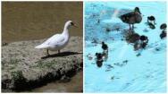 Galería: La flora y la fauna que han conquistado ahora el río Manzanares