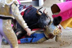 Imágenes de la espantosa cogida a García Navarrete en Las Ventas