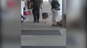 Un musulmán de 50 años acuchilla a un policía en el aeropuerto de Michigan