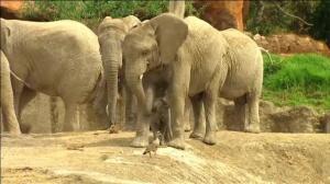 Nace el primer ejemplar de elefante africano en un zoo de México