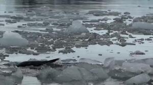 El hielo del Ártico alcanza su mínima extensión anual