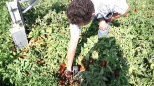 El sector agrícola es responsable del 70% del consumo de agua en el mundo